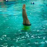 Programme Du sport pour moi! Printemps 2019 - Natation. Capitale-Nationale - Printemps 2019. Madeleine fait la chandelle, les 2 jambes bien droites sorties de l'eau.