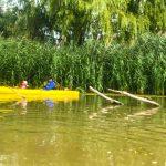 DSPM-Montréal-Automne 2019-Mayak. Mohamed et son papa en kayak sont allés voir la tortue sur la branche.